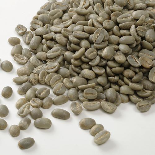 カフェ・ティモール コーヒー生豆 有機栽培